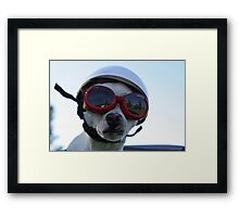 Chihuahua and the Bike Safety Message Framed Print