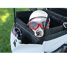 Chihuahua Demonstrates Napping Techniques in Goggles and Helmet Photographic Print