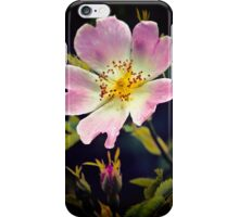 A Wild Rose iPhone Case/Skin
