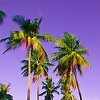 Phi Phi Palm Trees by Tim Topping