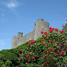 Roses at Harlech Castle by Andy Newham
