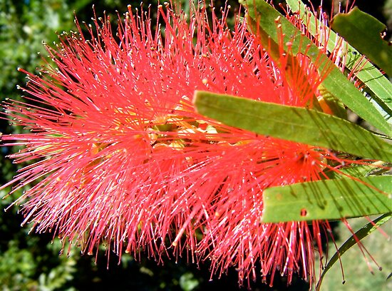 Bottle Brush by Gabrielle  Hope