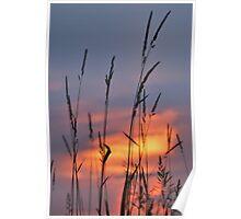 Tall Grass at Sunset Poster