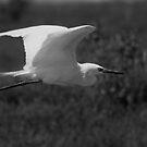 A Snowy Egret in Flight by Regenia Brabham