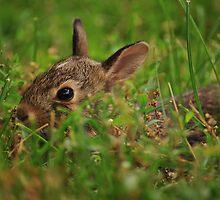Little Bunny Fu Fu by mnkreations