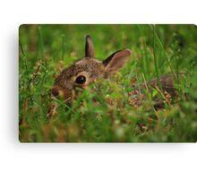 Little Bunny Fu Fu Canvas Print