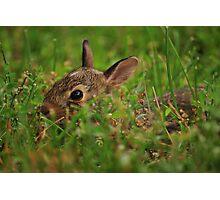 Little Bunny Fu Fu Photographic Print