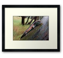 Southern Rainbow Skink Framed Print