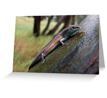 Southern Rainbow Skink Greeting Card
