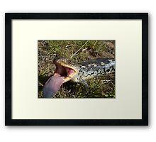 Blotched Blue-tongue Lizard Framed Print