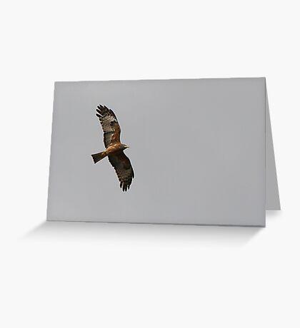 Square-tailed Kite Greeting Card