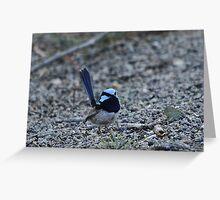 Superb Blue Fairy-wren Greeting Card