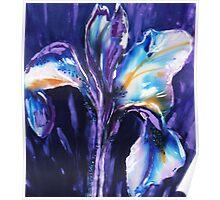 Iris on silk Poster
