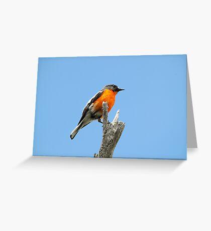 Flame Robin Greeting Card
