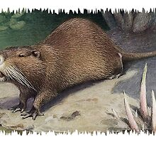 Painting of The Coypu, also known as the River Rat or Nutria.  by marmur