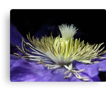 Clematis Crown Canvas Print