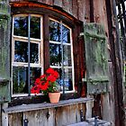 Beautiful Window by Daidalos