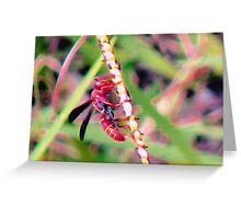 Reddish-brown Paper Wasp Greeting Card