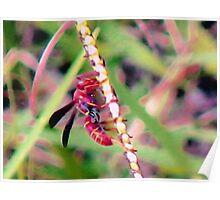 Reddish-brown Paper Wasp Poster