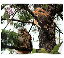 Great Horned Owl & Baby Poster