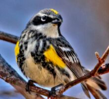 Yellow Rumped Warbler Sticker