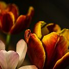 Three Tulips by Valerie Rosen