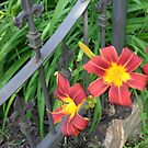 LILIES AT THE FENCE by goddarb