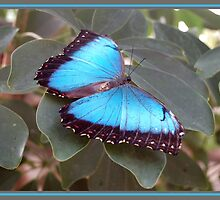 Butterfly by Els Steutel