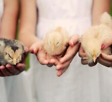 Baby Chicks by tamarakenyon