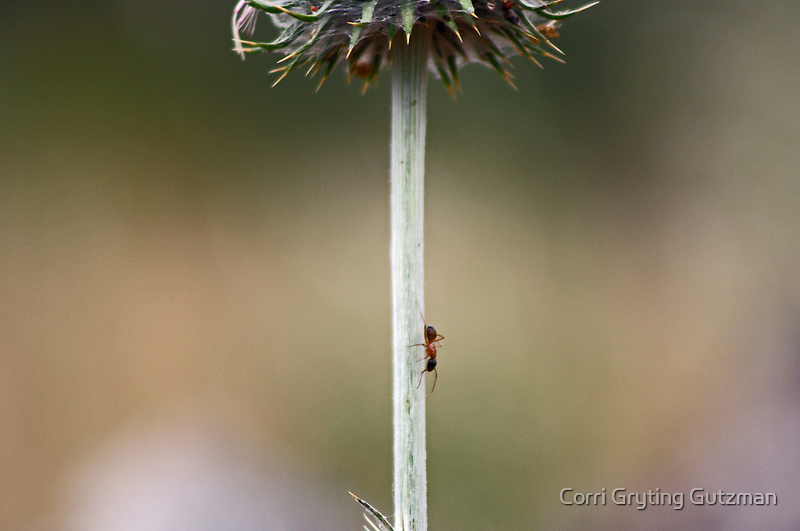 No One Can Say an Ant Can't -- Unframed by Corri Gryting Gutzman