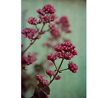 Rosy and Mintgreen Photographic Print