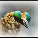 Roberfly by Savannah Gibbs
