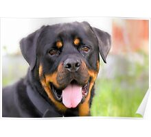 Rottie Smile Poster