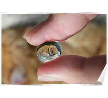 Cat at my fingertips Poster
