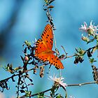 orange, black butterfly 112 by michaelBstone