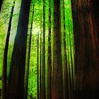The Red Woods Forrest by KeepsakesPhotography Michael Rowley