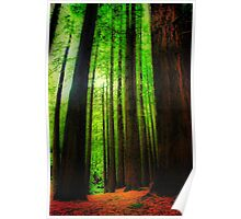 The Red Woods Forrest Poster
