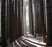 Sugar Pine Walk by EnviroKey