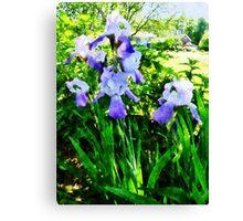 Purple Irises in Suburbs Canvas Print