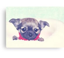 Happiness is sweet puppy breath.  Canvas Print