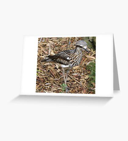 Bush Stone Curlew Greeting Card