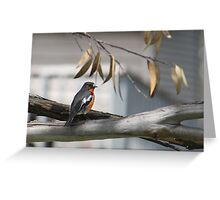 Flame Robin Greeting Card