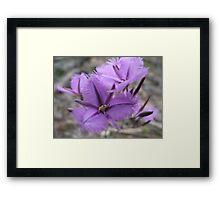 Common Fringe Lily Framed Print