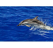 Wild free dolphin playing Photographic Print