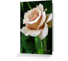 Rainy Day Rose. Greeting Card