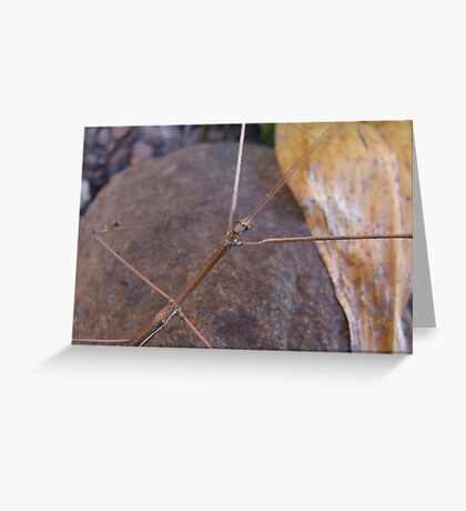 Titan Stick Insect Greeting Card