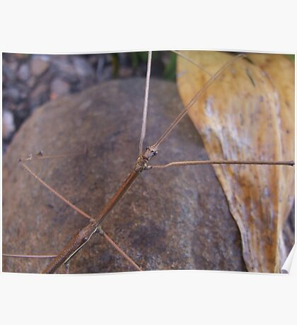 Titan Stick Insect Poster