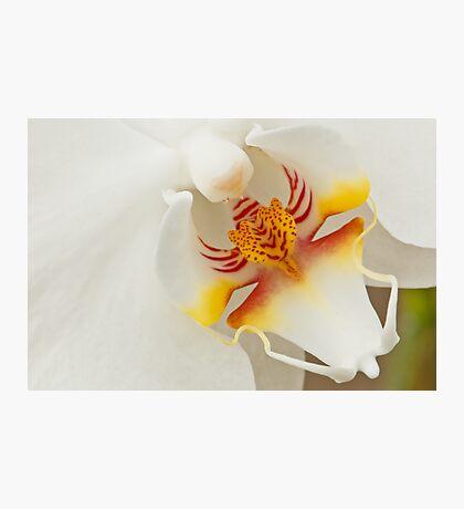 Orchid Macro Photographic Print