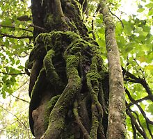 Twisted tree by Tim Coleman