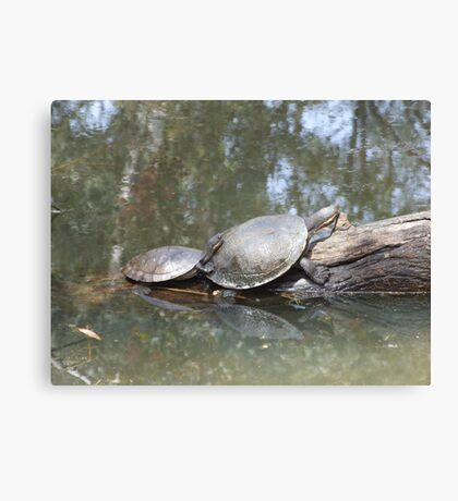 Macquarie Turtle Canvas Print
